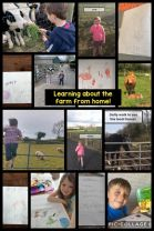P1 Learning about The Farm